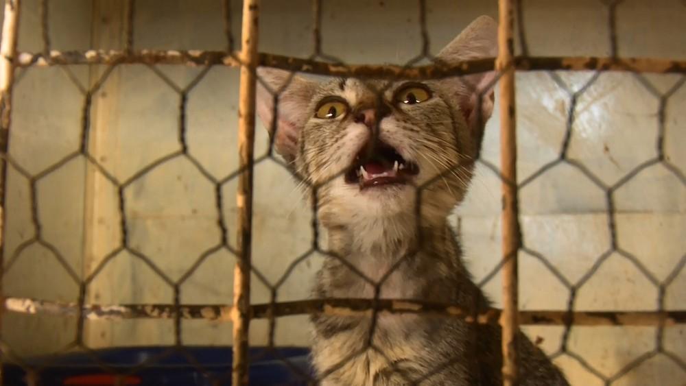 Animais são resgatados, cuidados e colocados para adoção - Foto: Reprodução/Rede Amazônica