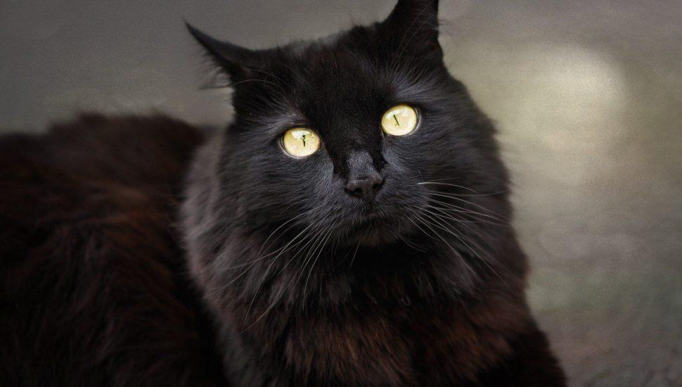 Gatos pretos correm riscos nas ruas sempre que uma sexta-feira 13 se aproxima. Foto: Visual Hunt