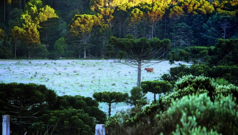 Geada em pleno verão na Serra Catarinense neste sábado. Foto: Mycchel Legnaghi / São Joaquim Online / Fotos Públicas