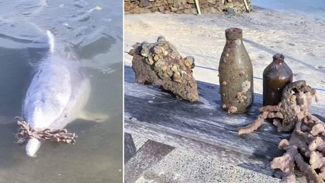 Golfinhos sentem a falta de humanos durante a quarentena e deixam